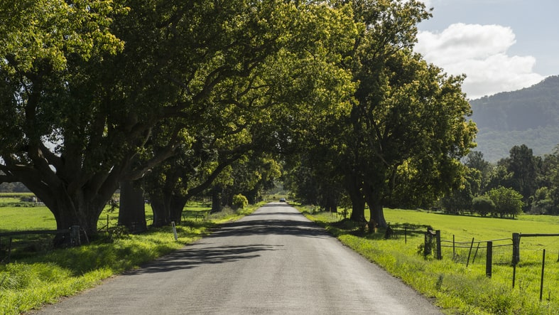 nature shot of trees and rural highway in kangaroo valley, NSW